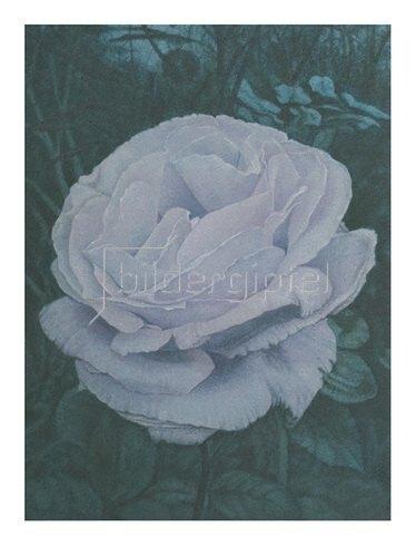 Christina Kraus: La Rose du petit prince II
