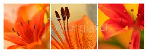 Günter Kozeny: Florale Form: Lilien