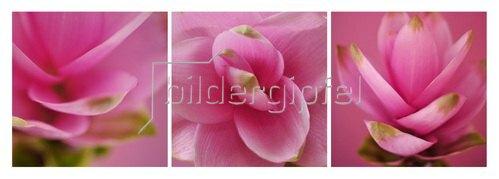 Günter Kozeny: Floreale Form : CURCUMA