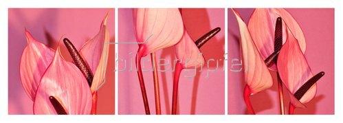 Günter Kozeny: Florale Formen: Anthurieae