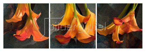 Günter Kozeny: Florale Form: CALLA, gelborange