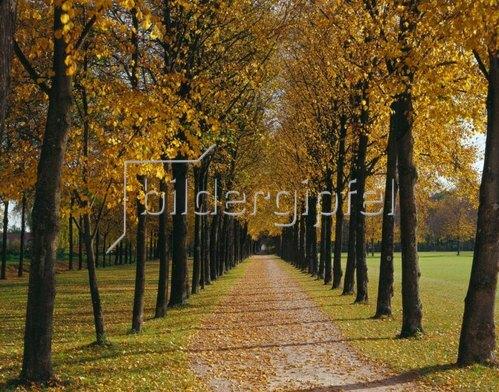 Allee im Hofgarten, Neues Schloss Schleissheim, München, Oberbayern, Bayern, Deutschland