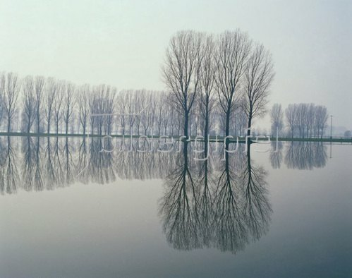 Trees at the water