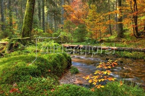 Zauberwald im Taubenmoos in Bernau, Südlicher Schwarzwald