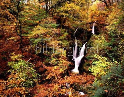 Stockghyll Force Wasserfall bei Ambleside, Lake District, Cumbria, England, Grossbritannien