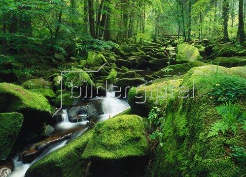 Saussbachklamm bei Waldkirchen, Niederbayern, Bayern, Deutschland