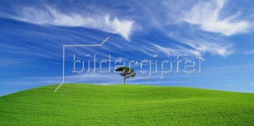 Tree in a green field, Chianti, Toskana, Italien