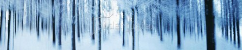 Forest in winter,