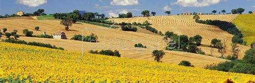 Hills near Cingoli town, Marken, Italien