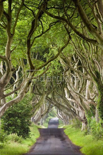 Dark Hedges, Antrim, Nordirland, Vereinigtes Königreich
