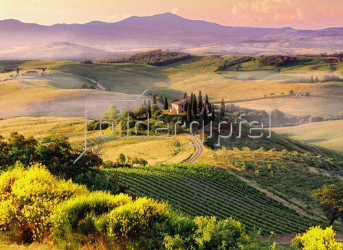 Typical landscape near San Quirico d'Orcia town, Orcia Tal, Toskana, Italien