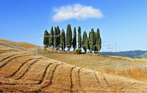 Cypress trees, Orcia Tal, Provinz Siena, Toskana, Italien