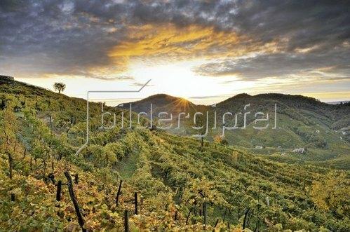 Vineyard of Cartizze in autunm, Valdobbiadene, Provinz Treviso, Prosecco Weinstrasse, Venetien, Italien