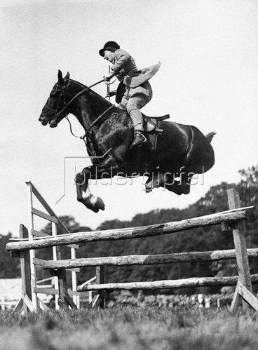 Junge Springreiterin auf dem Pferd Peter, das die Hinterhand eng an den Bauch gepreßt hat, bei der Show der Fife Agricultural Society. Photographie. 14.6.1936.