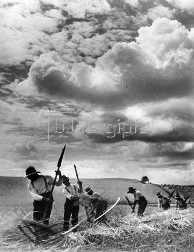 Bauern bei der Ernte. Photographie. Um 1935.