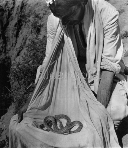 Schlangen. Photographie. Um 1935.