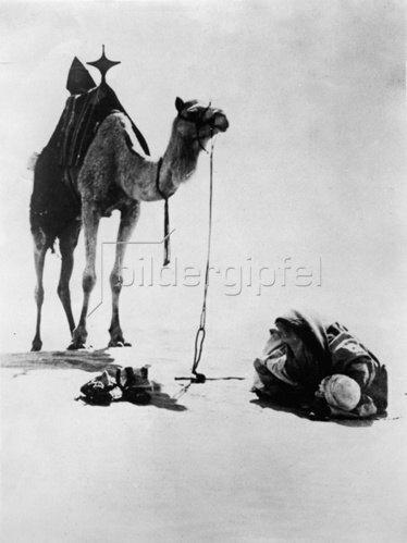 Ein Kameltreiber betet in der Wüste zu Allah. Photographie. Um 1935.