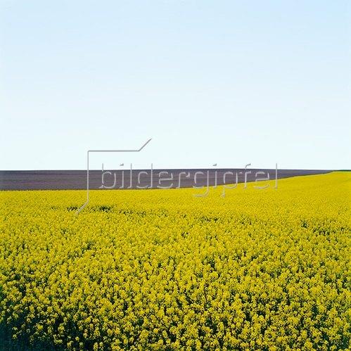 Jana Hiller: Landschaft IV