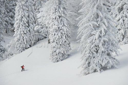 Michael Reusse: Alpen, Bayern, Herzogstand, Skitour