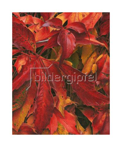 Quint Buchholz: Blätter im Herbst