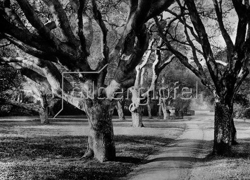 Gebrüder Haeckel: Parkanlage der University of California at Berkeley - um 1910