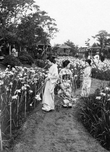 Gebrüder Haeckel: Tokio: Japanerinnen beim Lustwandeln in einem Iris-Garten. Um 1910
