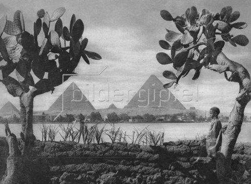 Blick über den Nil auf die Pyramiden von Kairo
