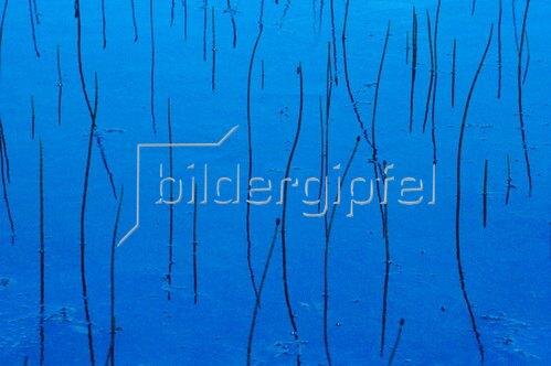 Uwe Suthmann: Pflanzenstiele im Wasser