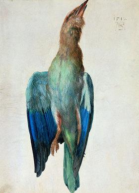 Albrecht Dürer: Blaurackenflügel