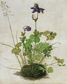 Albrecht Dürer: Akelei