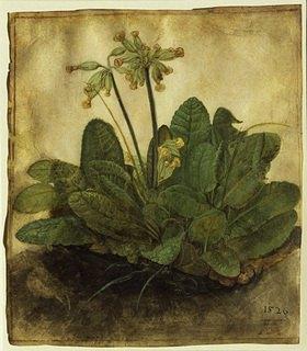 Albrecht Dürer: Schlüsselblume (Primula veris)