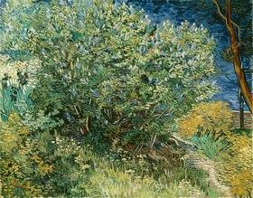 Vincent van Gogh: Flieder