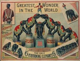 Anonym: Elefantendressur / Farblithographie