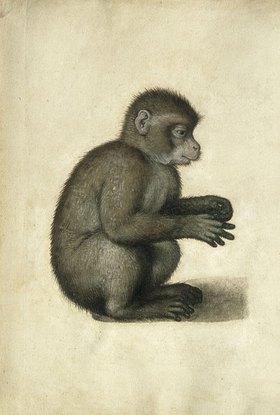 Albrecht Dürer: Affe