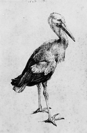 Albrecht Dürer: Stork, c