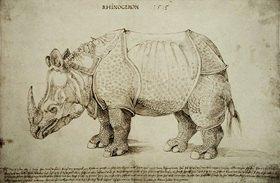 Albrecht Dürer: Rhinozeros