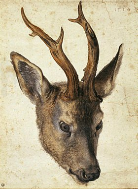 Albrecht Dürer: Der Kopf eines Rehbocks