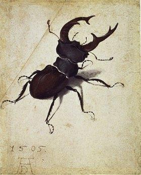 Albrecht Dürer: Hirschkäfer (Lucanus cervus)