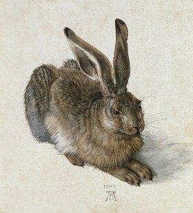 Albrecht Dürer: Junger Feldhase