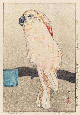 Yoshida Hiroshi: Obatan Sittich