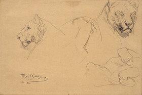 Rosa Bonheur: Studies of a Lioness