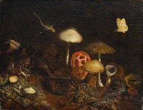 Otto Marseus van Schrieck: Reptilien, Pilze und Schmetterlinge