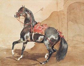Französisch: Arabisches Pferd