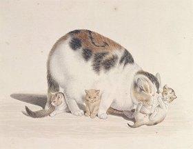 Gottfried Mind: Katze mit drei Jungen