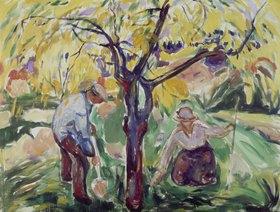 Edvard Munch: Apfelba