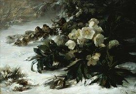 Gabriel Edouard Thurner: Schneerosen