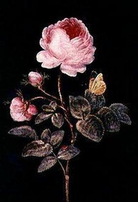 Barbara Regina Dietzsch: Die hundertblättrige Rose