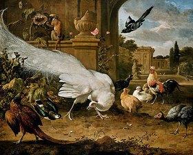 Melchior d' Hondecoeter: Der weiße Pfau