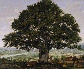Jean-Jacques Rousseau: Blick auf die Ebene von Annecy mit grosser Eiche