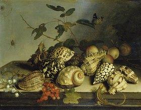 Balthasar van der Ast: Muscheln und Früchte
